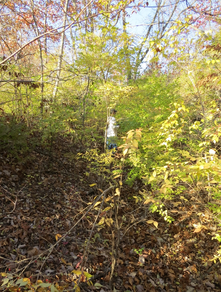Historic Byram's Ford Road prior to clearing brush