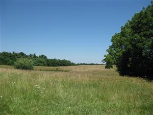 Looking north across Boonville battlefield from the 'Federal Line of Battle' tour stop