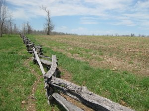 Fence row for Ray's Cornfield near where Plummer crossed Wilson's Creek